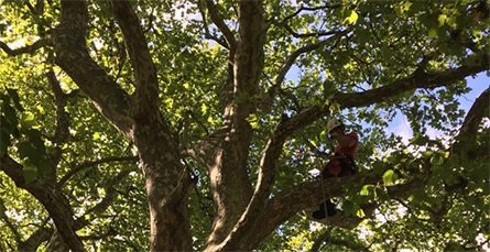 élagage arbres