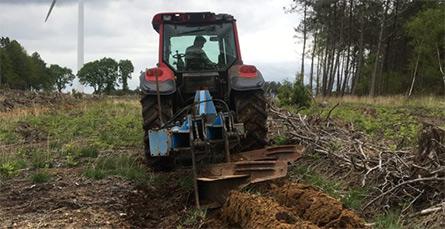 labour forestier